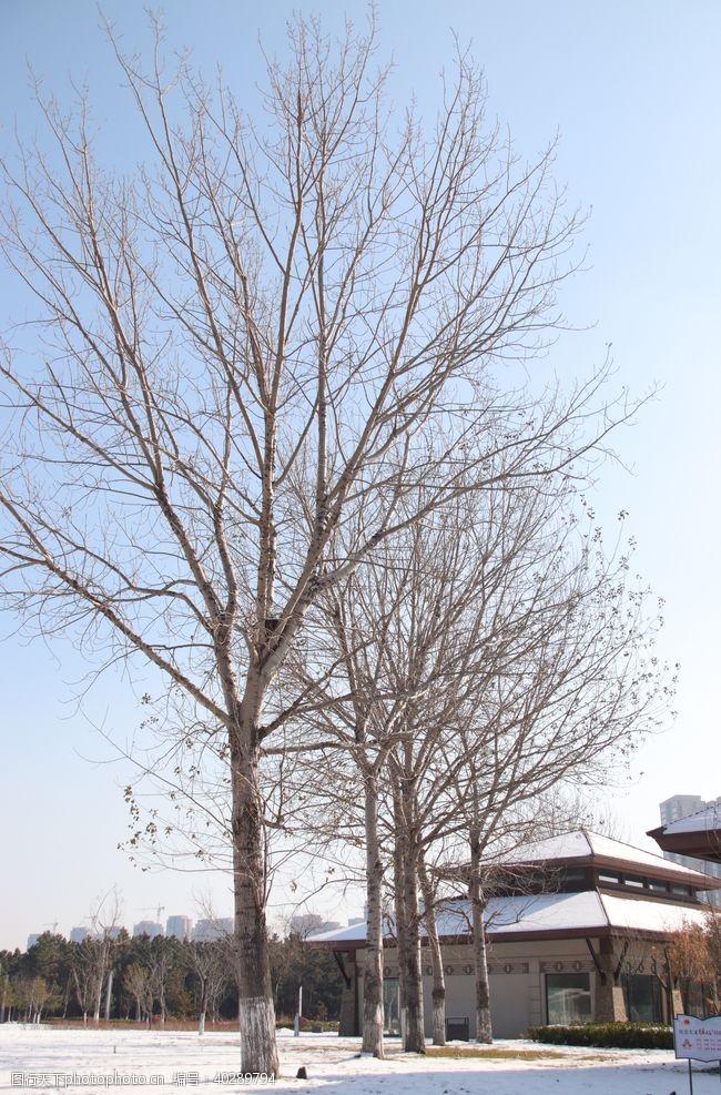 树木雪地里的树图片