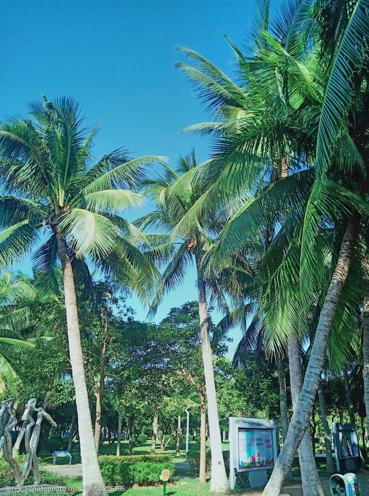 公园椰林图片