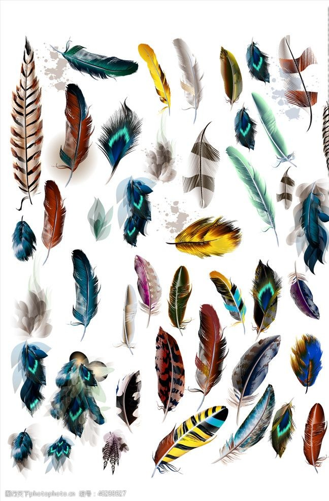 印花图案羽毛图片