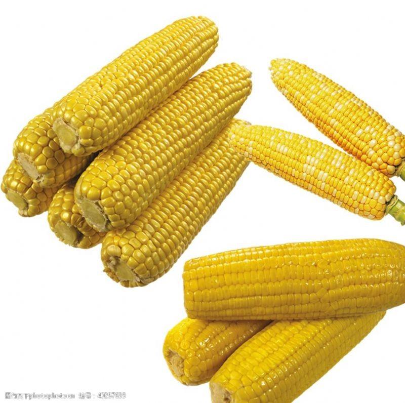 小玉米玉米图片