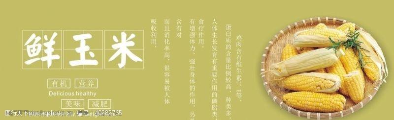 小玉米玉米展板图片