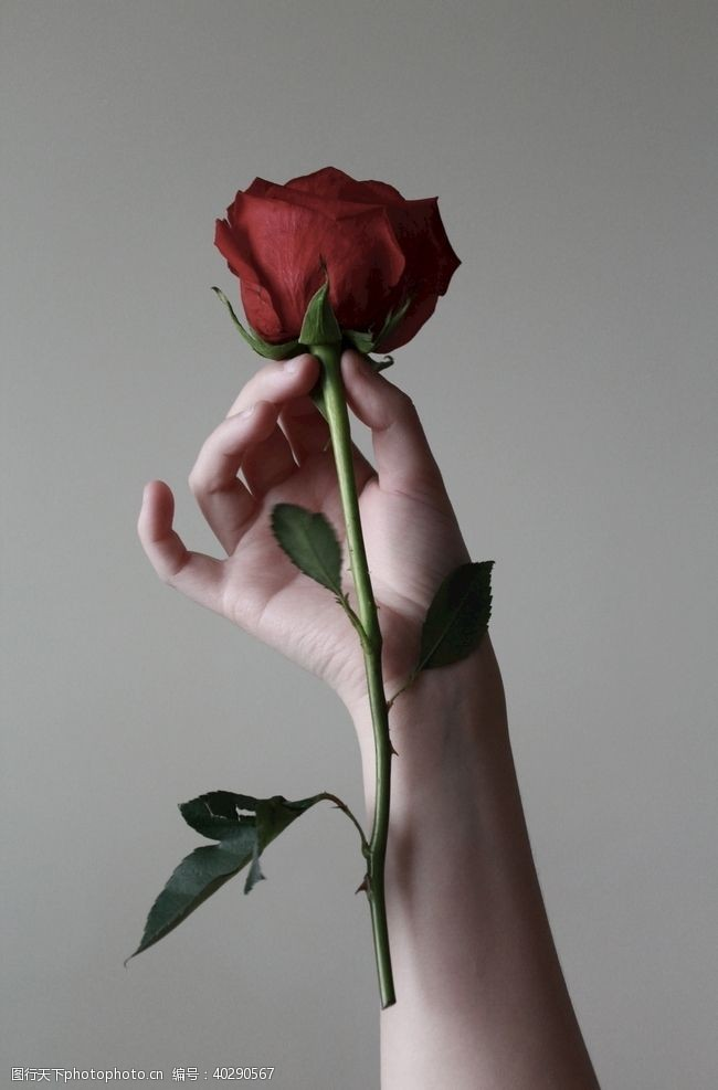人物图库赠人玫瑰手有余香图片