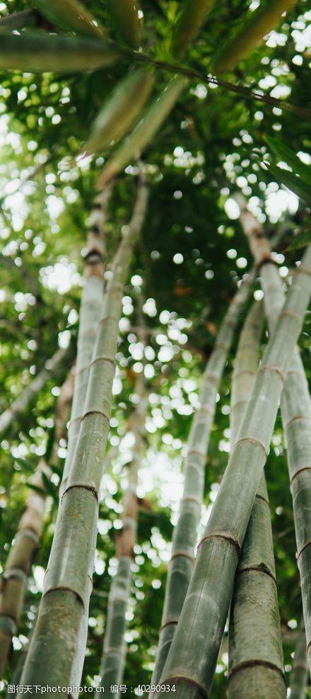 竹子竹林图片