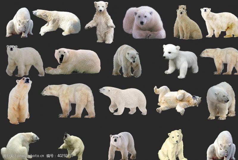 小熊北极熊图片