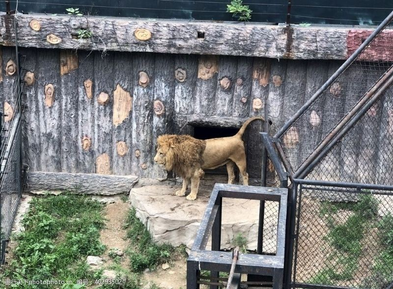 狮子大连野生动物园图片