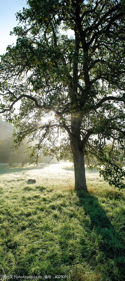 草地风景图片