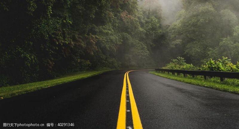 大树公路图片