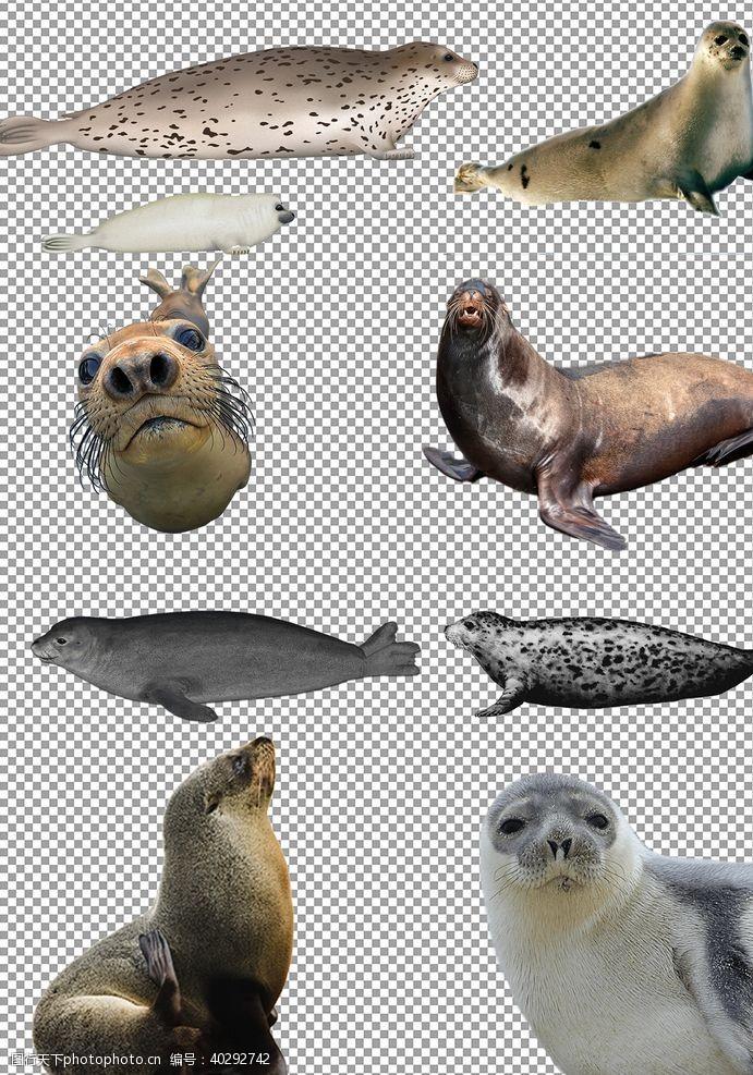 分层图海豹图片