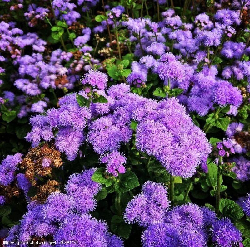 花蕊花卉图片