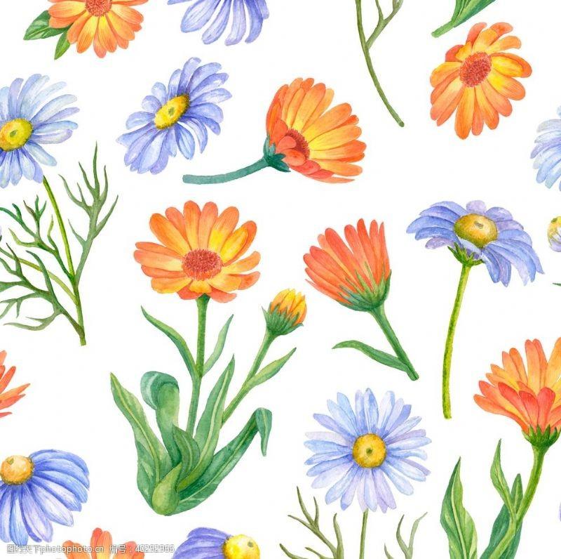 花素材菊花图片