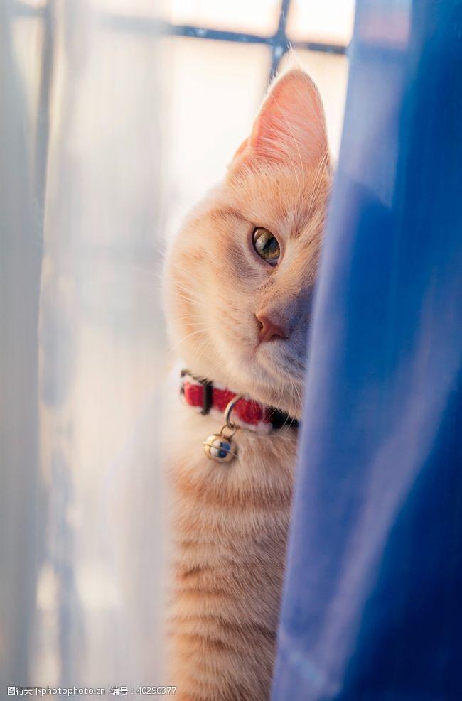 白色猫猫图片