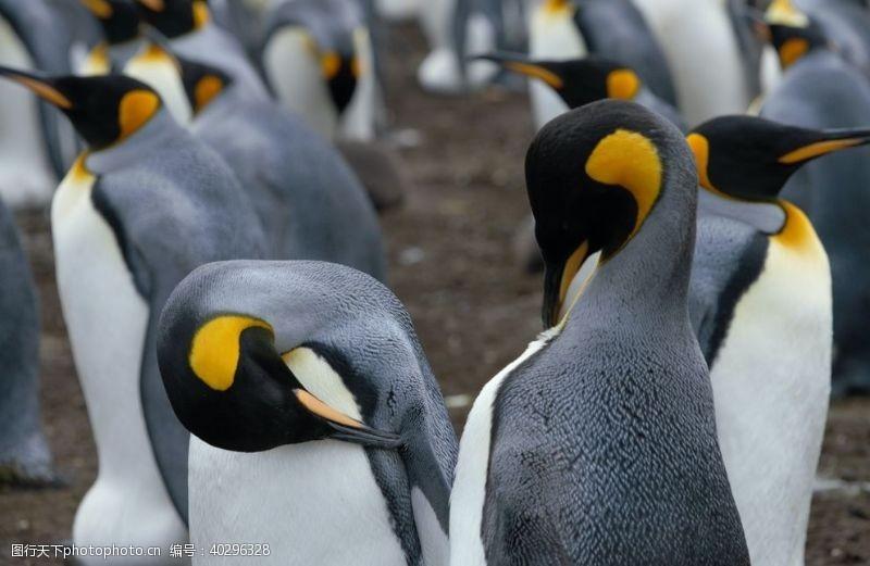 海洋企鹅图片