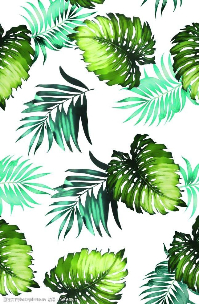 线条热带花图片
