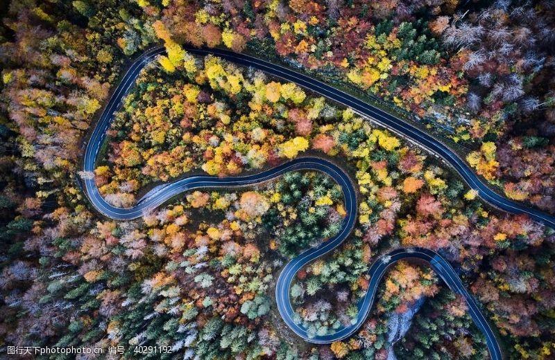 森林公路图片