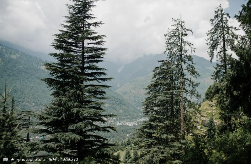 雪山山林图片