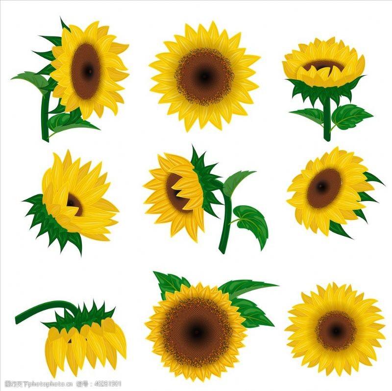 矢量葵花素材向日葵花朵图片