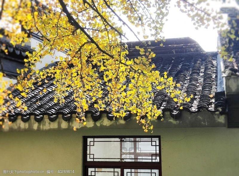 叶子屋顶的一缕阳光图片