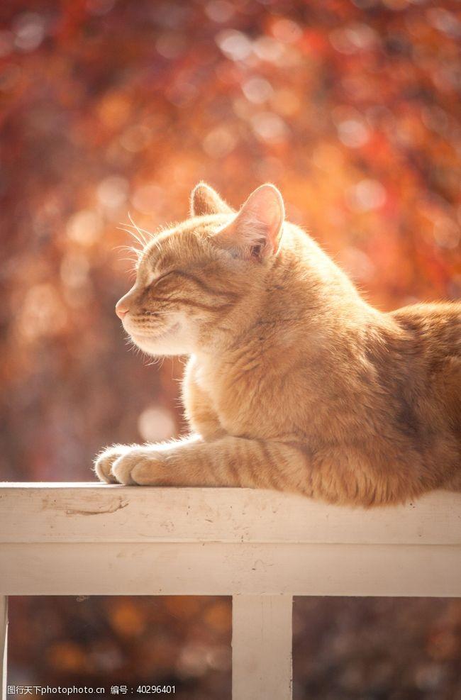 白色小猫咪图片