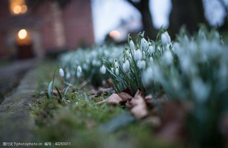 梦幻背景雪滴花图片