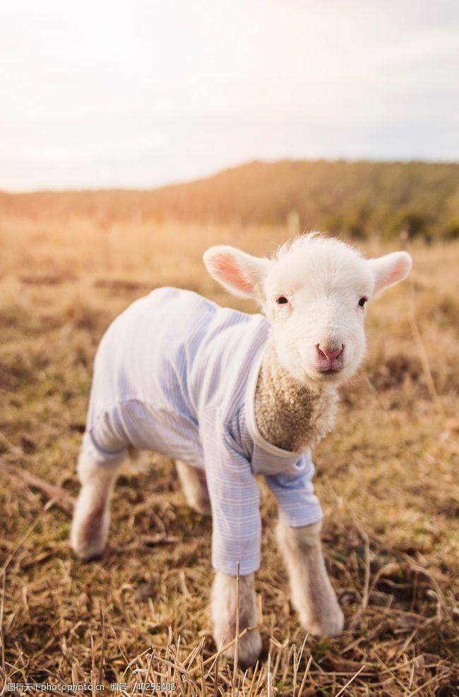 生物世界羊图片