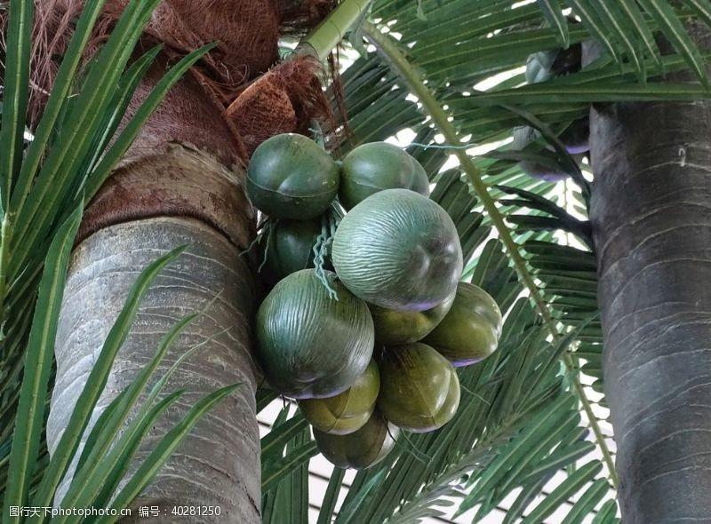 海滩椰树椰子图片
