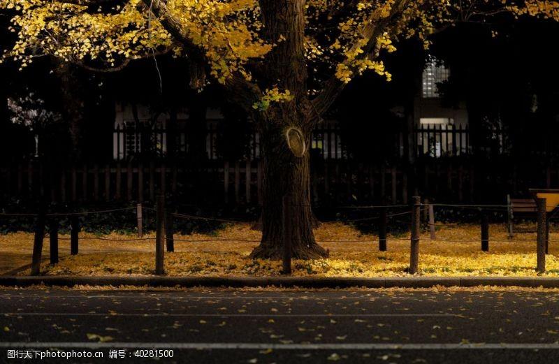 绿树银杏树叶图片
