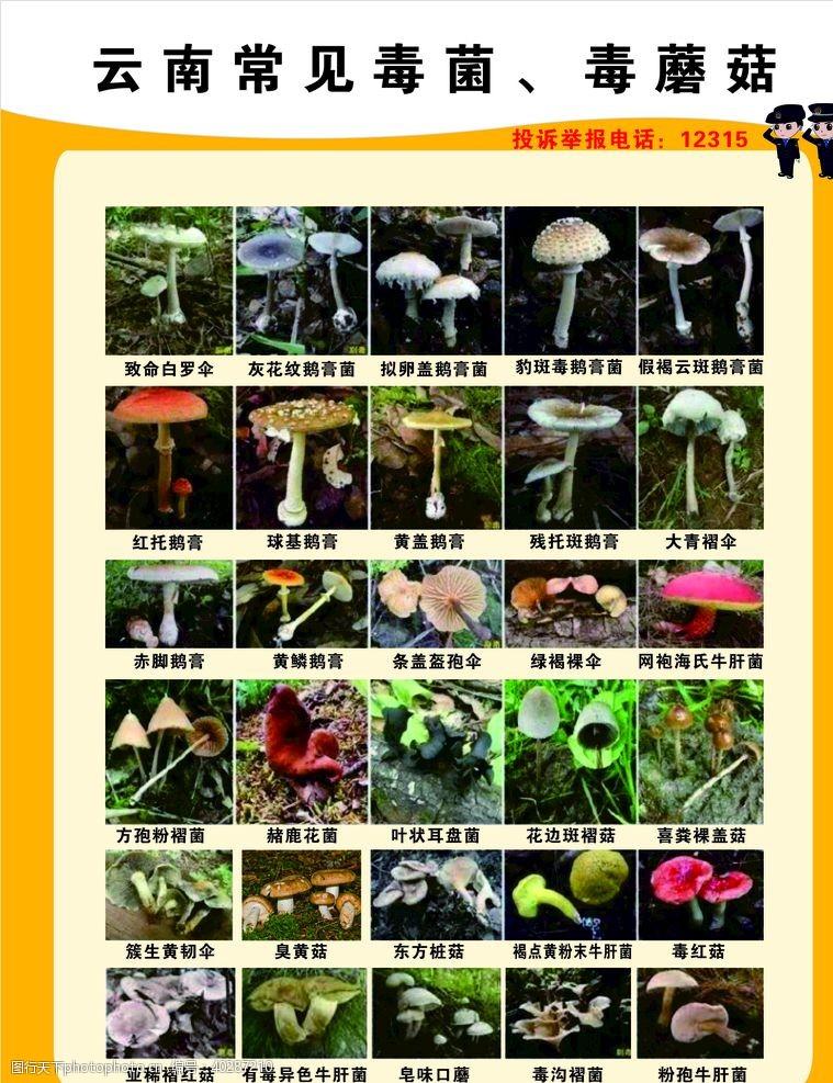云南毒蘑菇图片