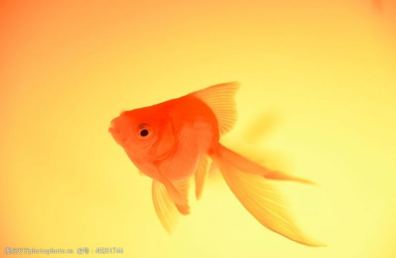 鱼类鱼图片