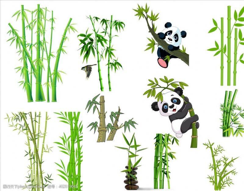 竹子竹图片
