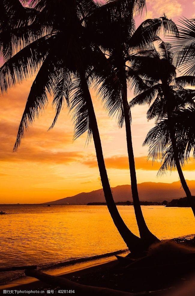 棕榈树图片