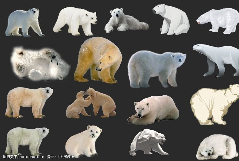 分层图北极熊图片