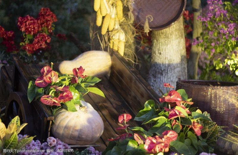 小玉米农家乐图片