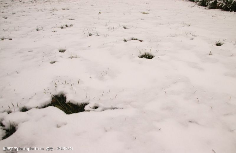 草坪雪地图片